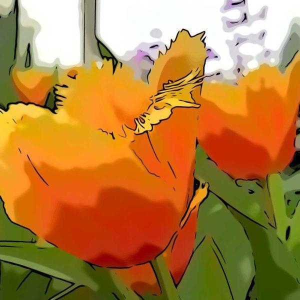 tulips ard